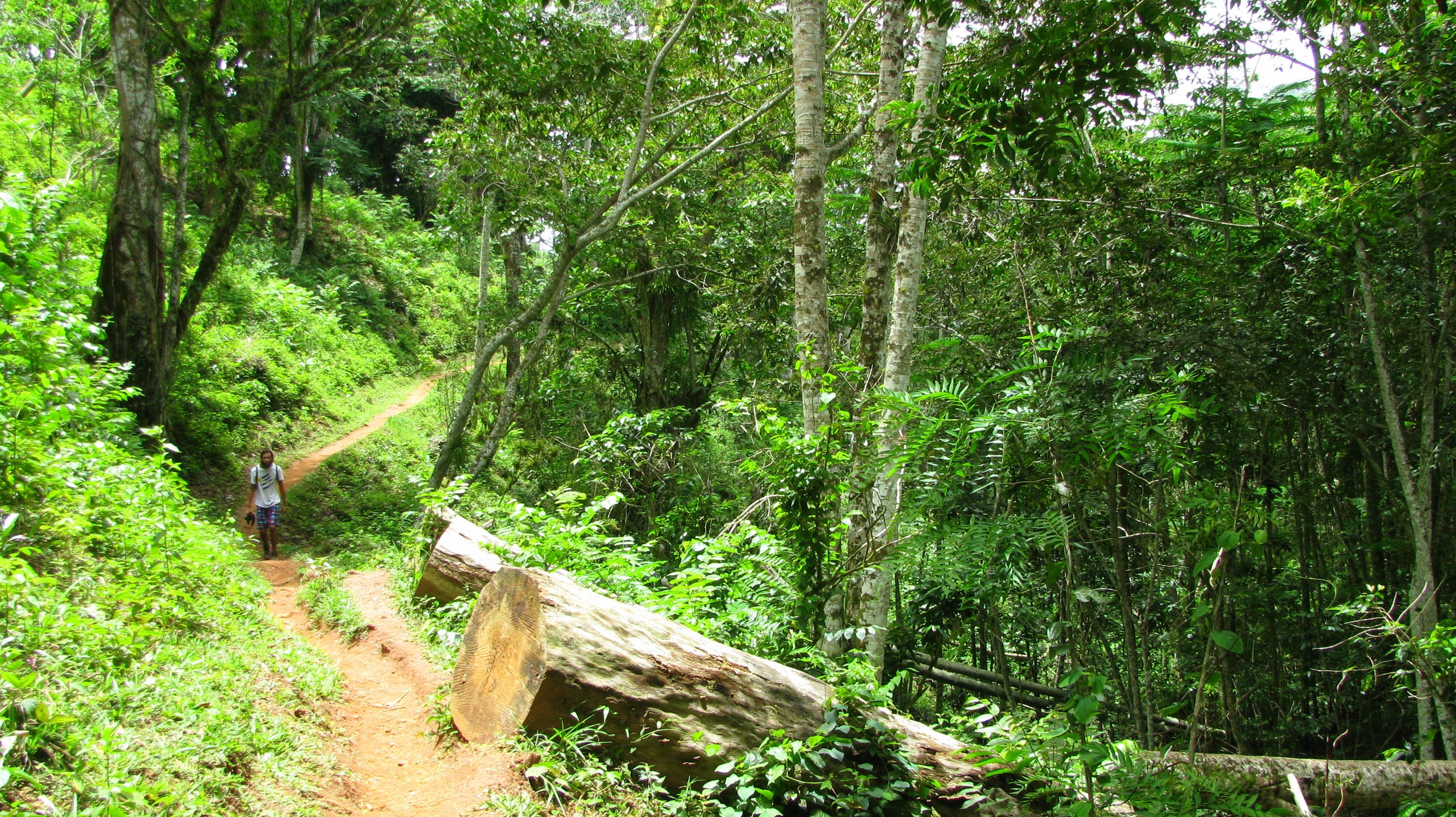 El sendero Salto del Caburní en Tope de Collantes, Trinidad, Cuba. Un lugar de espesa vegetación, lleno de maravillas de fauna y flora.