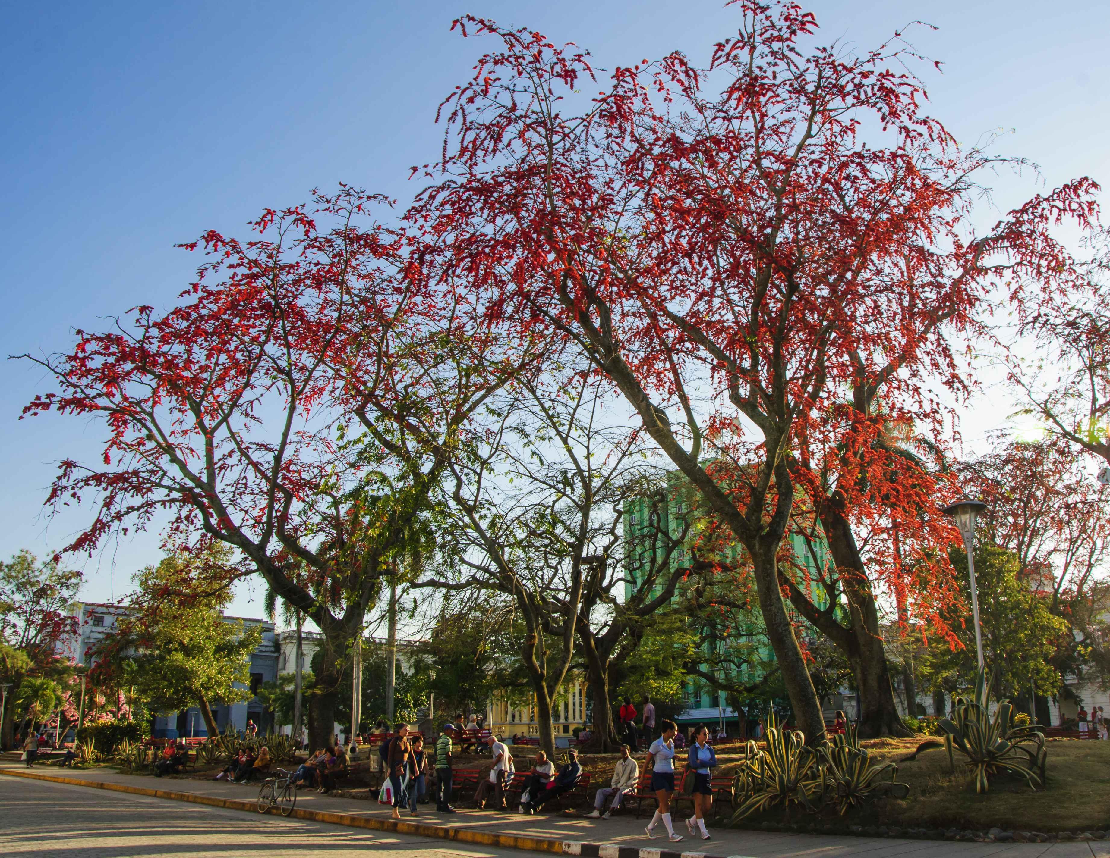 Central park in Santa Clara, Parque Vidal, Cuba.